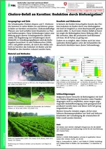 brassica juncea research paper