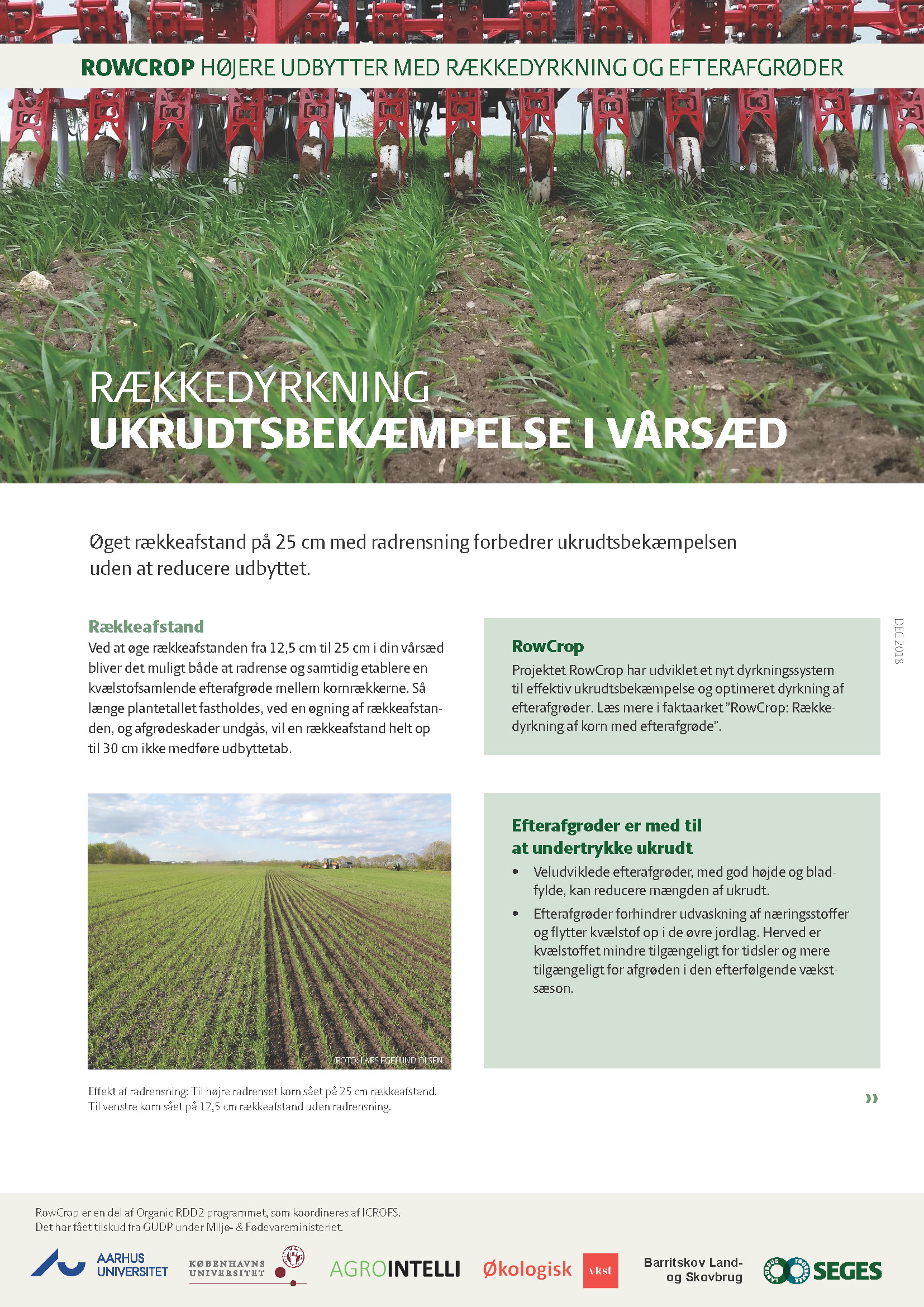 Cultivation in rows – Weed control in spring cereal grains