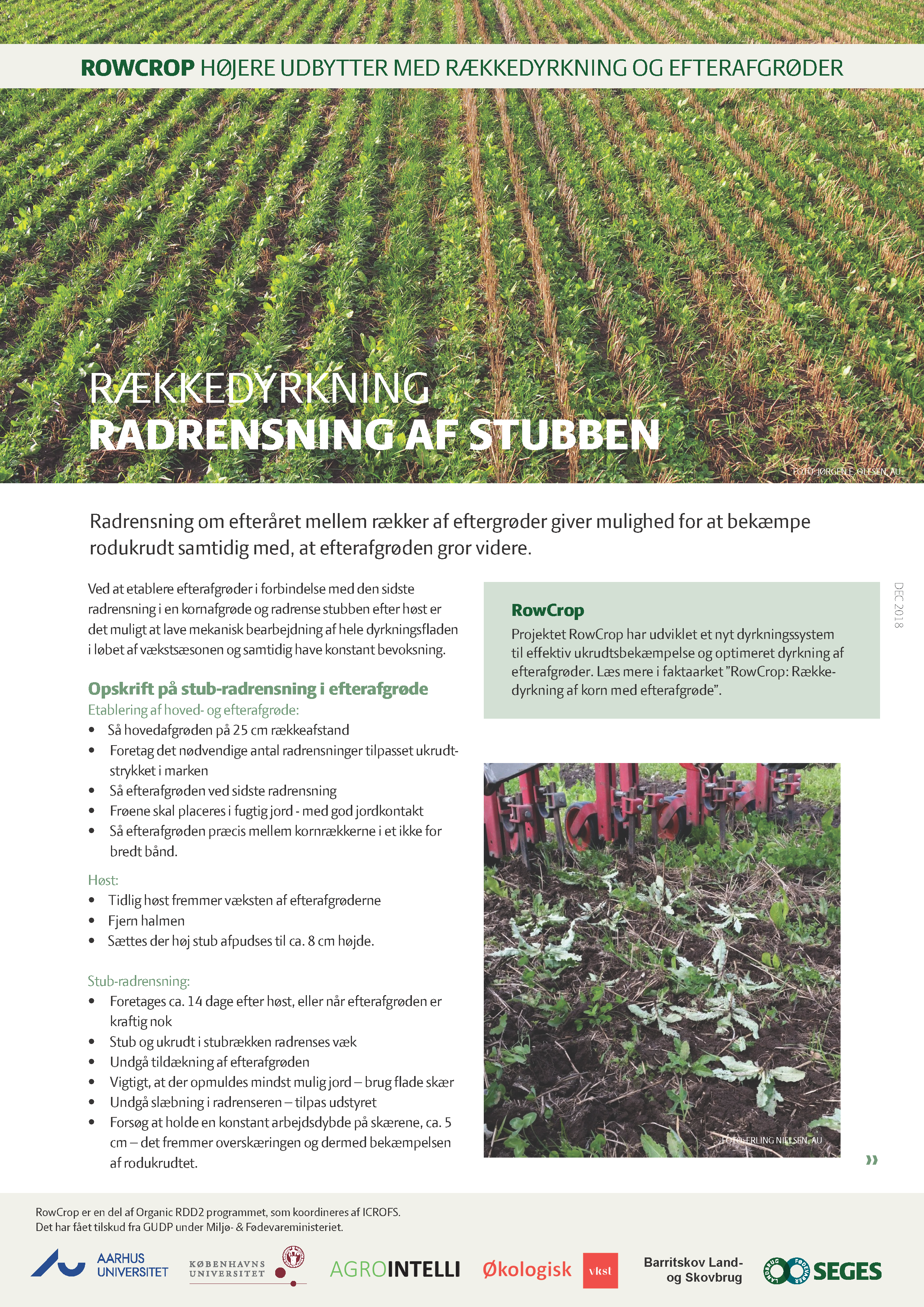 Cultivation in rows – Weed control between stubble rows