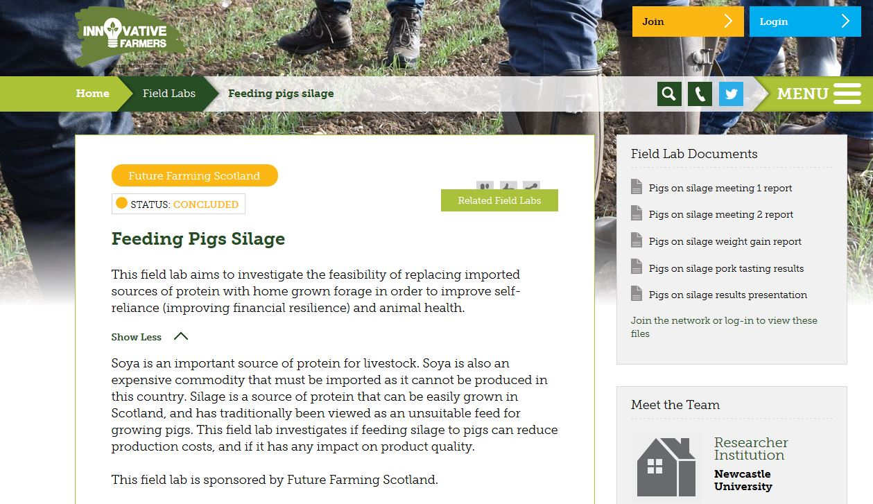 Feeding pigs silage