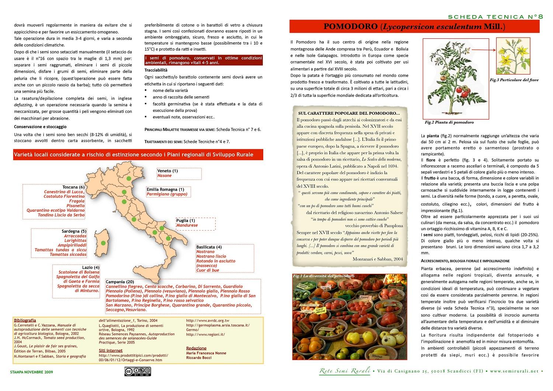 Tomato (Lycopersicon esculentum Mill.)